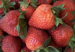 Bild zu Yukis Erdbeeren