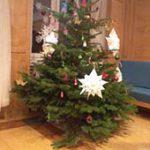 """Bild """"Unser Weihnachtsbaum!"""""""